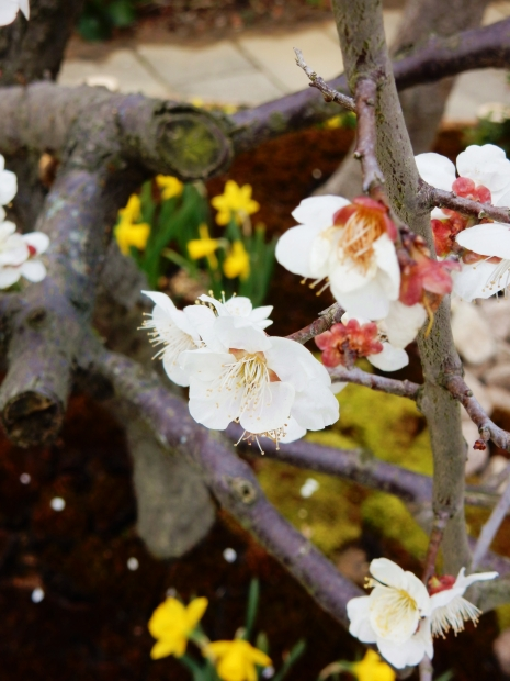 Kokoen - Blossoms near entrance